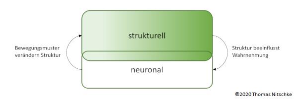 Struktur und Funktion